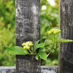 What You Need to Know About Fence Etiquette