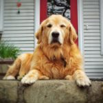 5 Dog Breeds Who'd Love a Yard to Play In